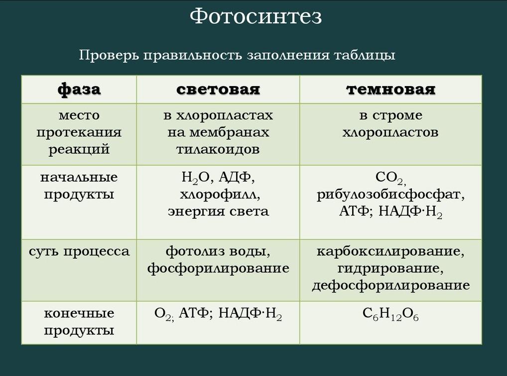 Заполните таблицу фазы фотосинтеза