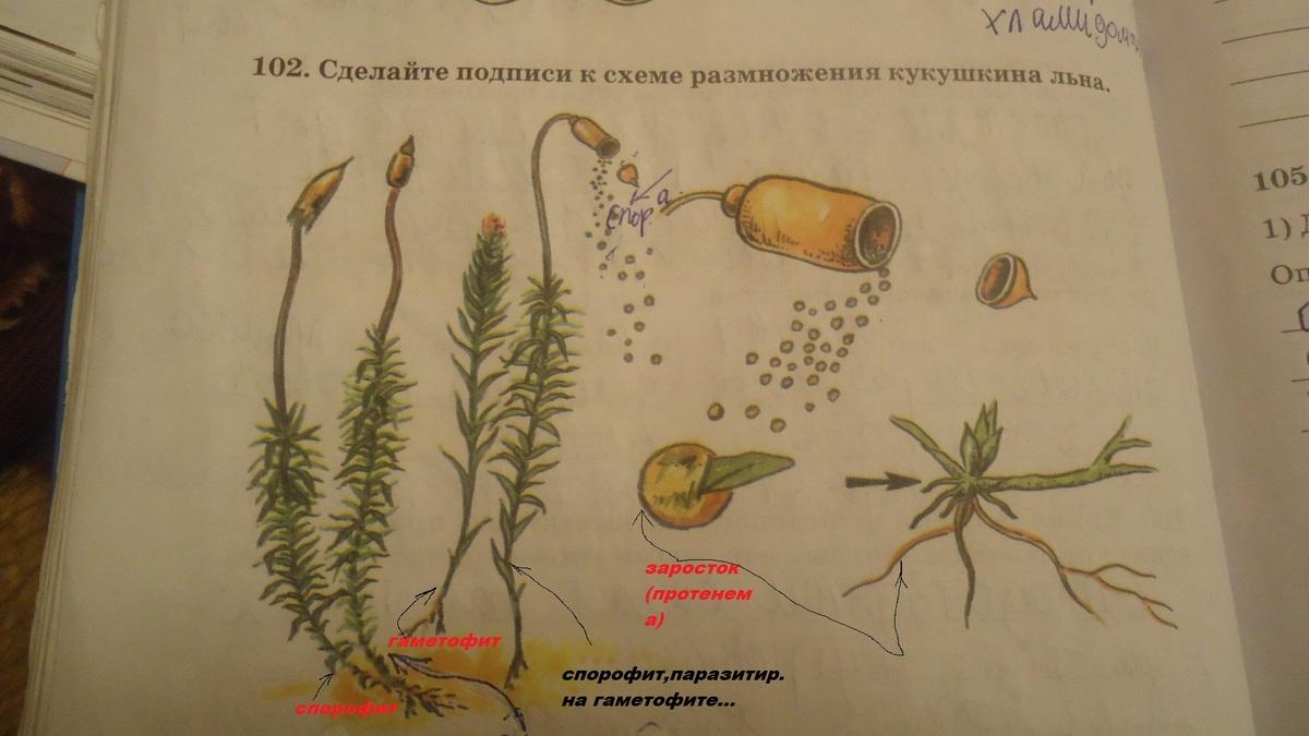 растения размножаются схемы