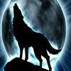 wolflook