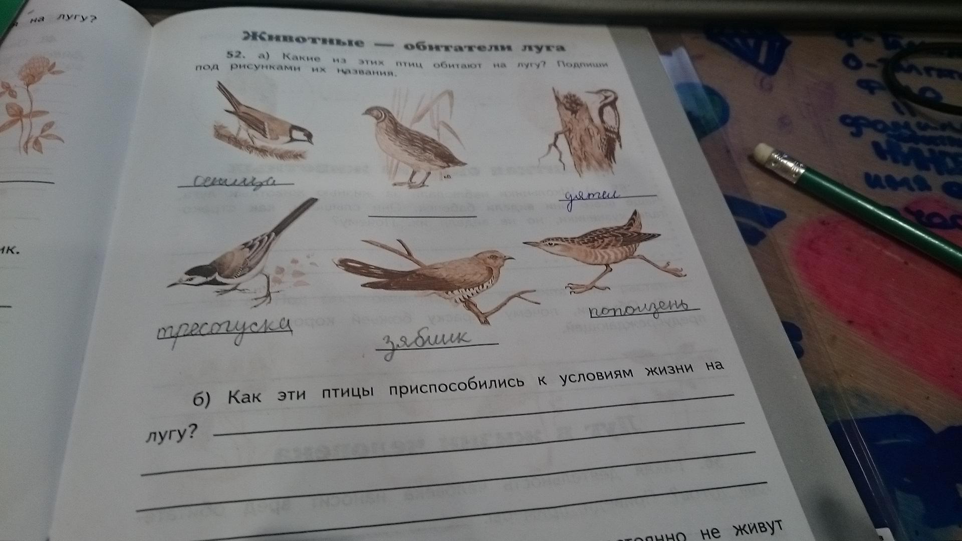 какие птицы обитают в москве фото и названия