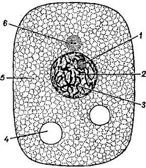 Клетка живая система схема 193