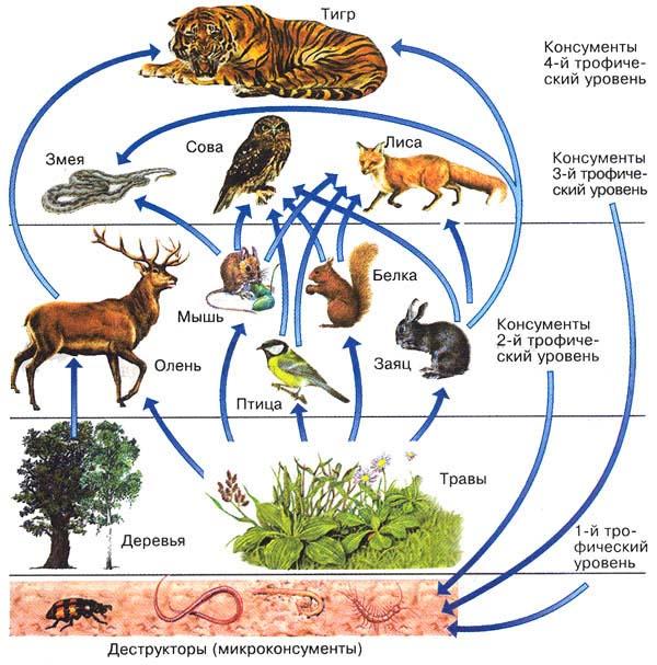 Схема взаимосвязи живой и неживой природы фото 532