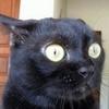 Catycat78