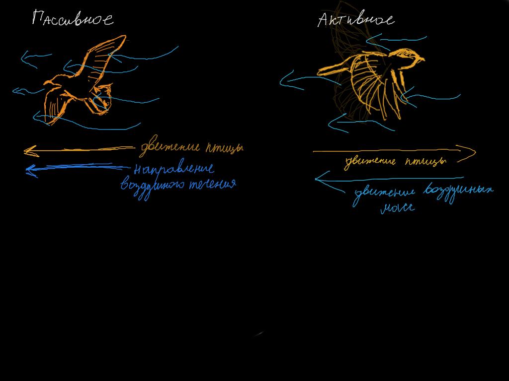 презентация на тему раздражимость нервная система с картинками