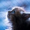 Котеночек13