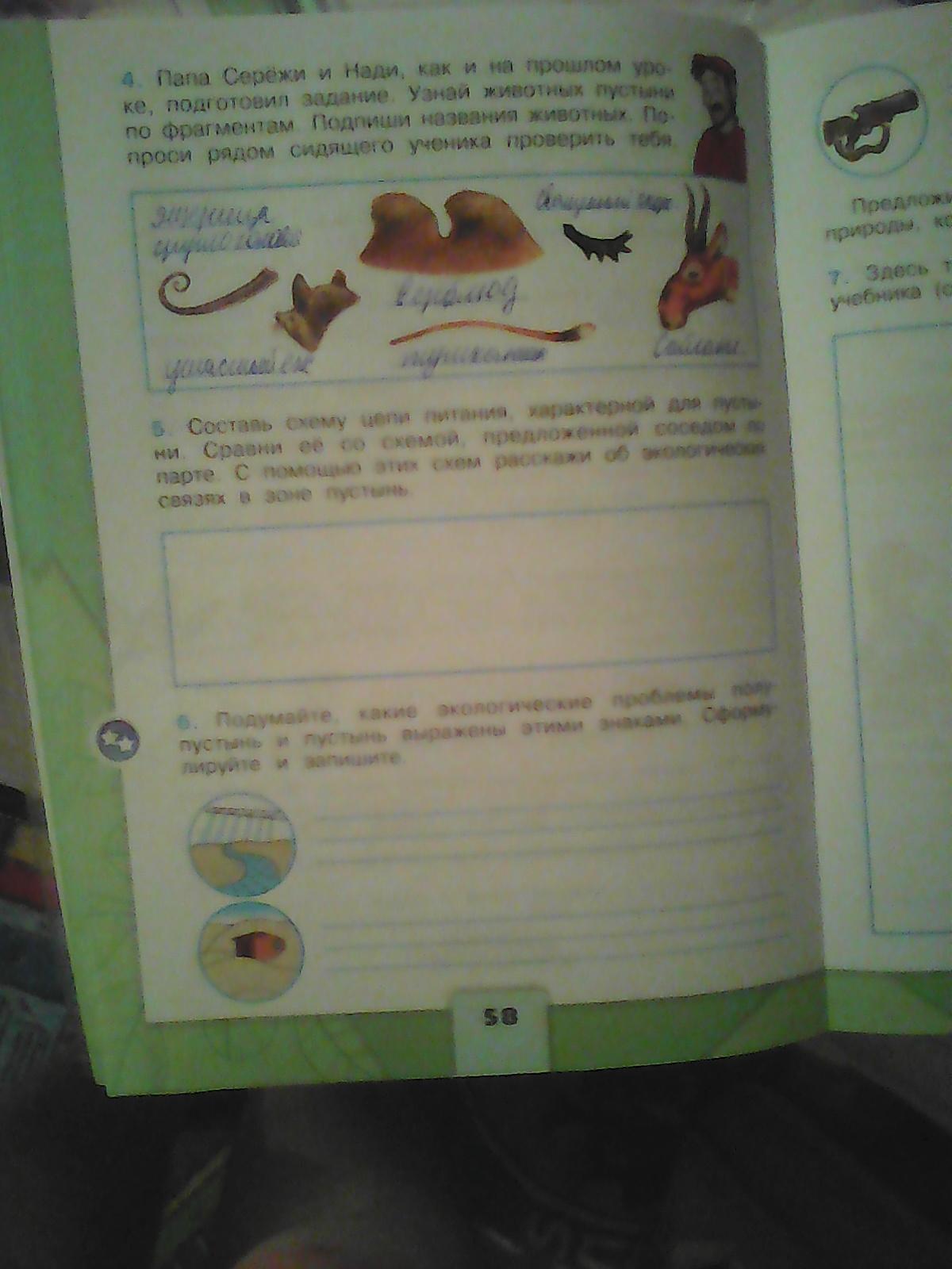 Схема цепи питания животных тайги фото 833