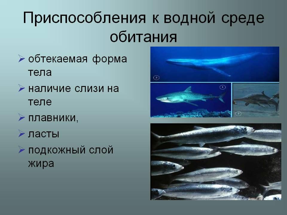 Животное водной среды доклад 9433