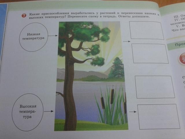 Какие приспособления выработались у растений к