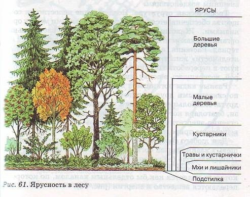 Просмотр изображений по метке: ярусы растений