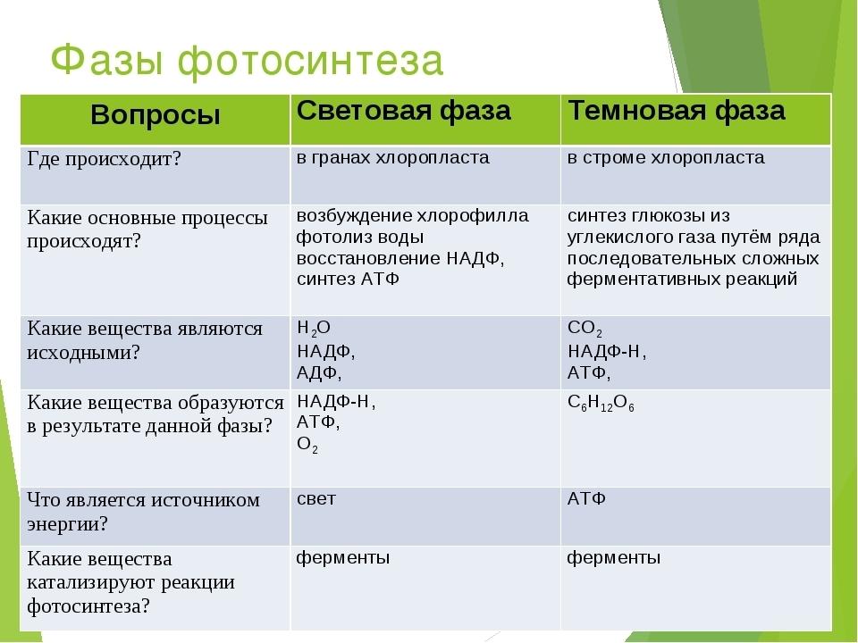 фотосинтез механизм процесса понятия