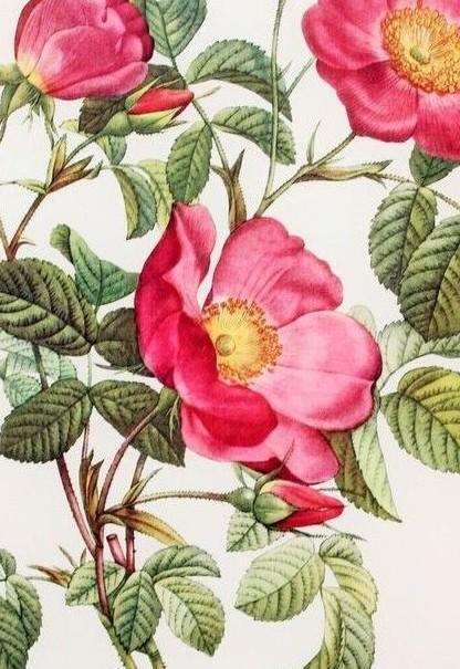Пояснити утворення яскравих квіток з сильним