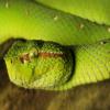 Змей855