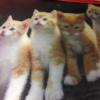 cat353