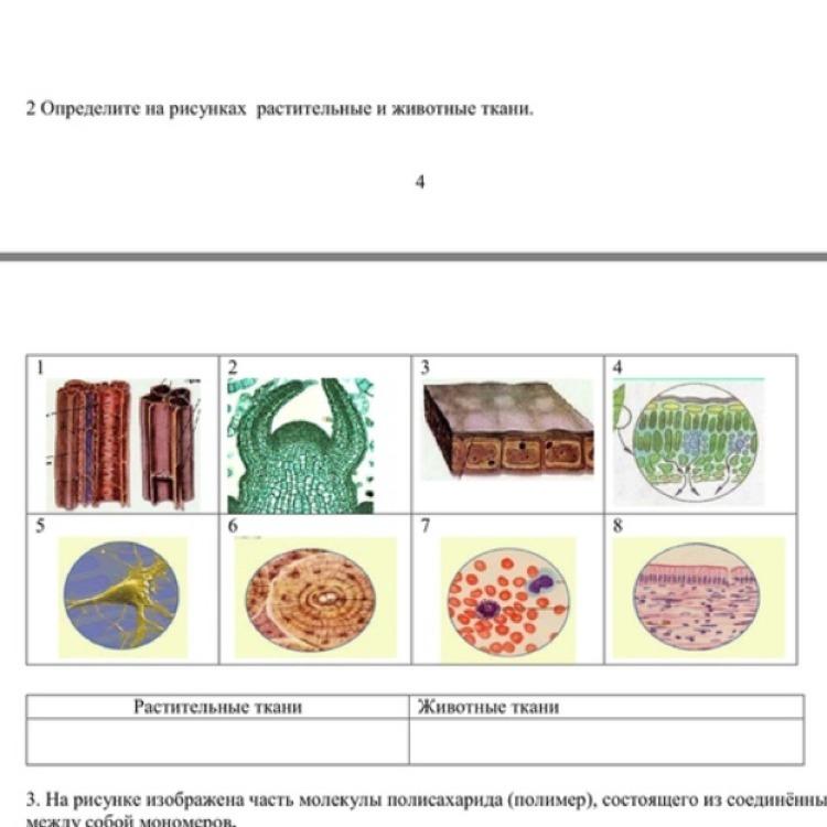 ткани растений и животных рисунок обыкновенная богата множеством