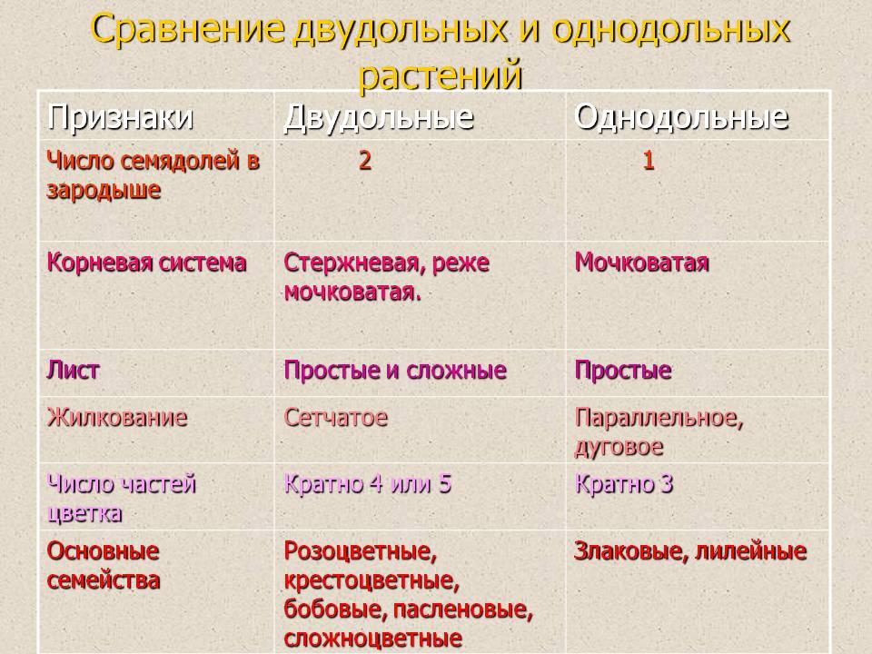семена двудольных и однодольных растений таблица
