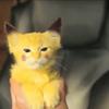 Kittengirlfour