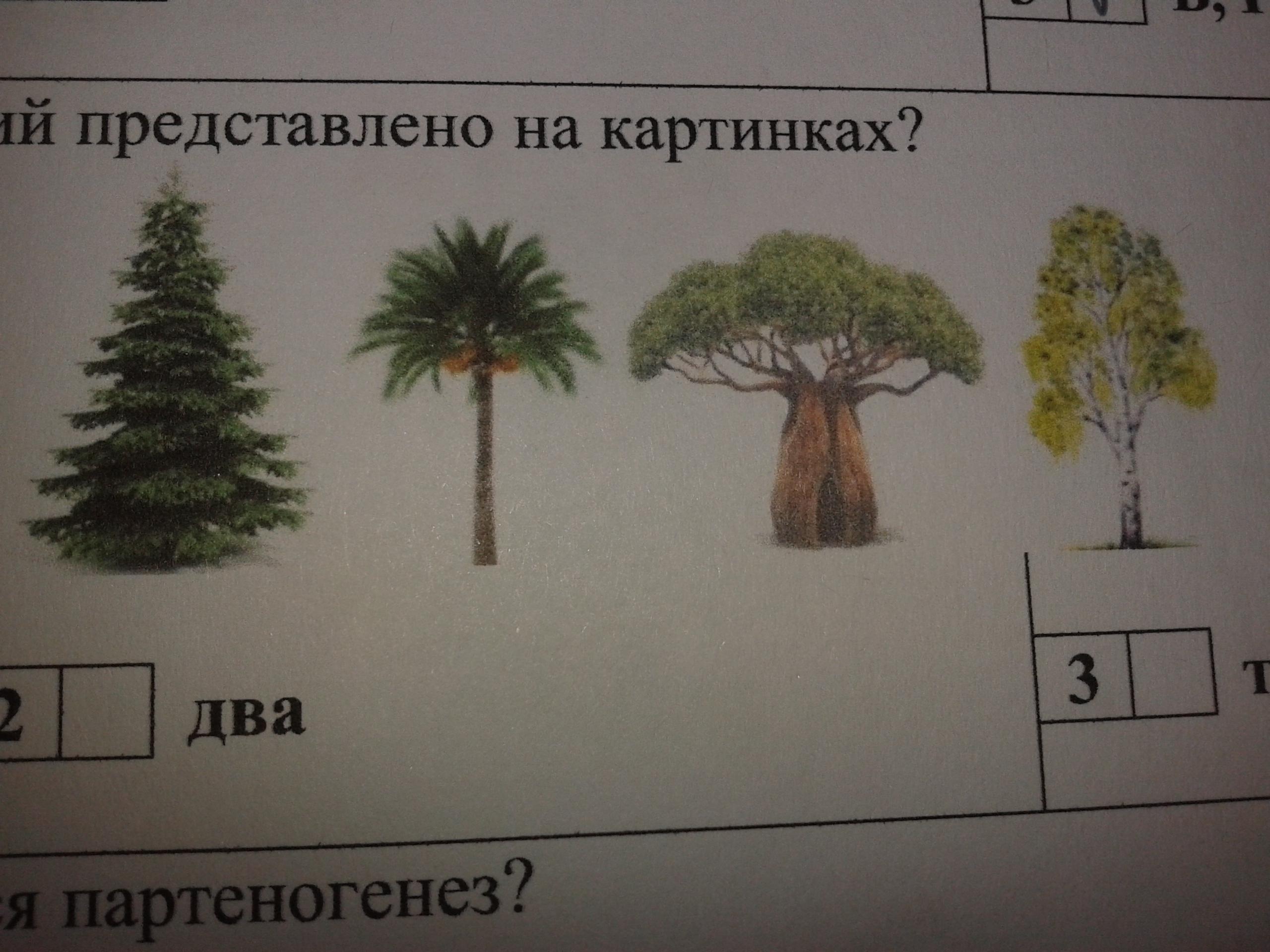 Сколько однодольных растений вы видите? помогите, пожалуйста!1) одно2) два3) три