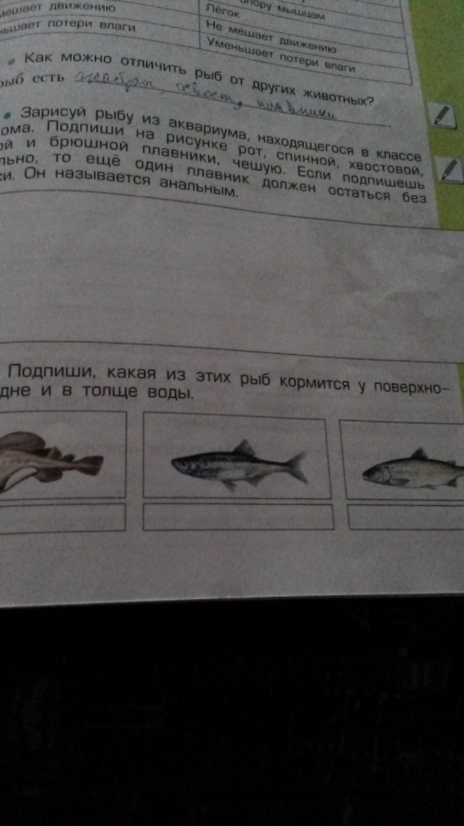 как можно рыб отличить от других животных