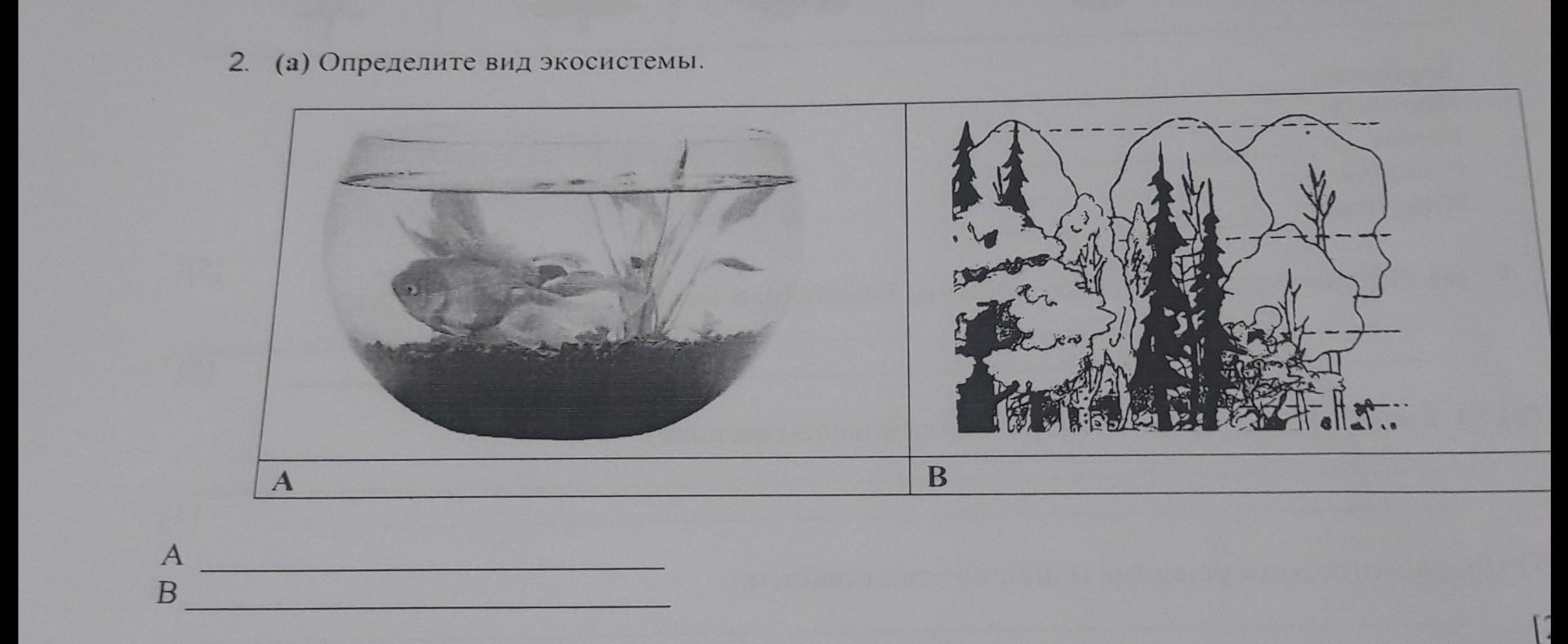 Опредилите вид экосистем