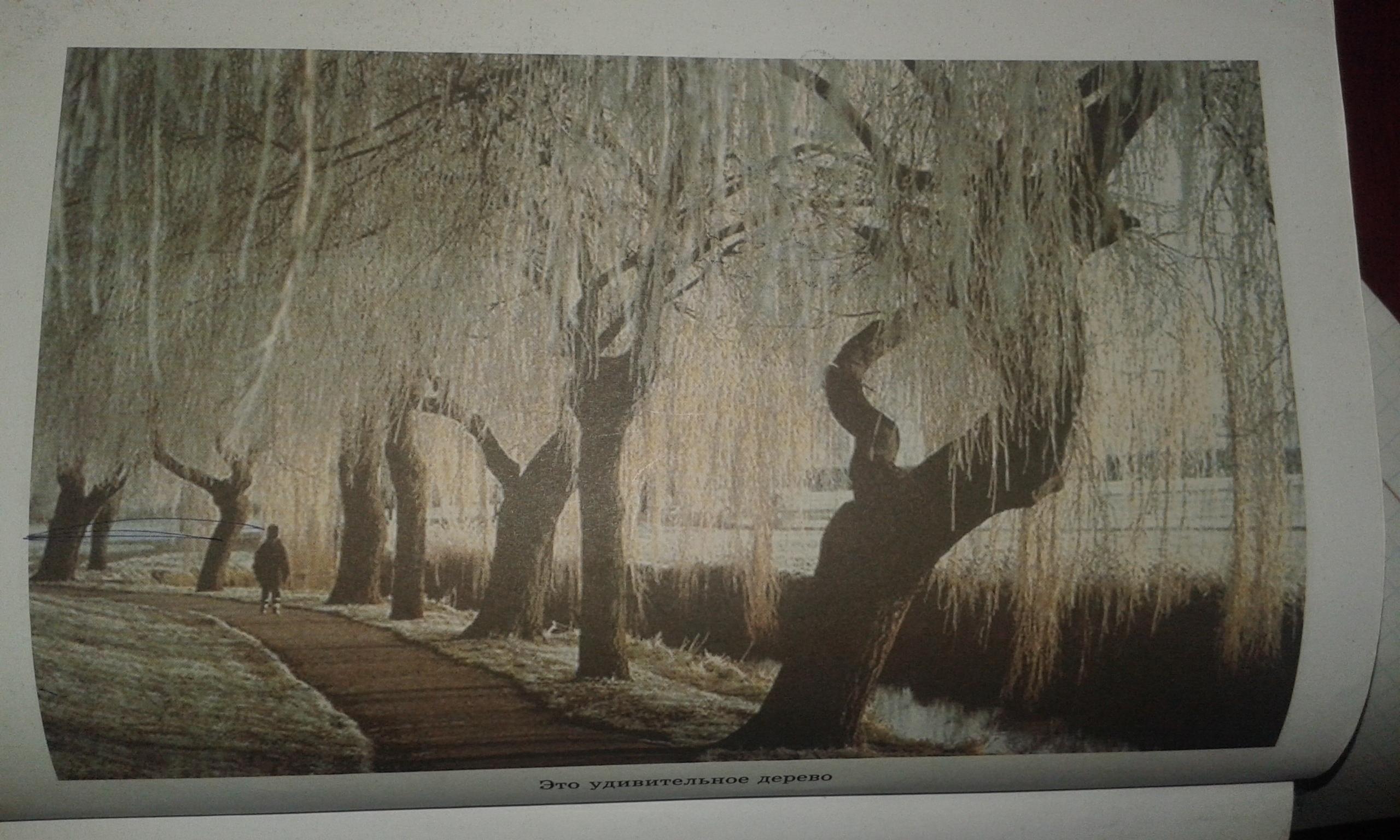 """Сочинение по картине """"Удивительное дерево """""""