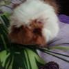 mimimimi2006