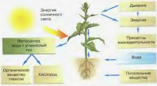 к внешним факторам фотосинтеза относится просто могут жить