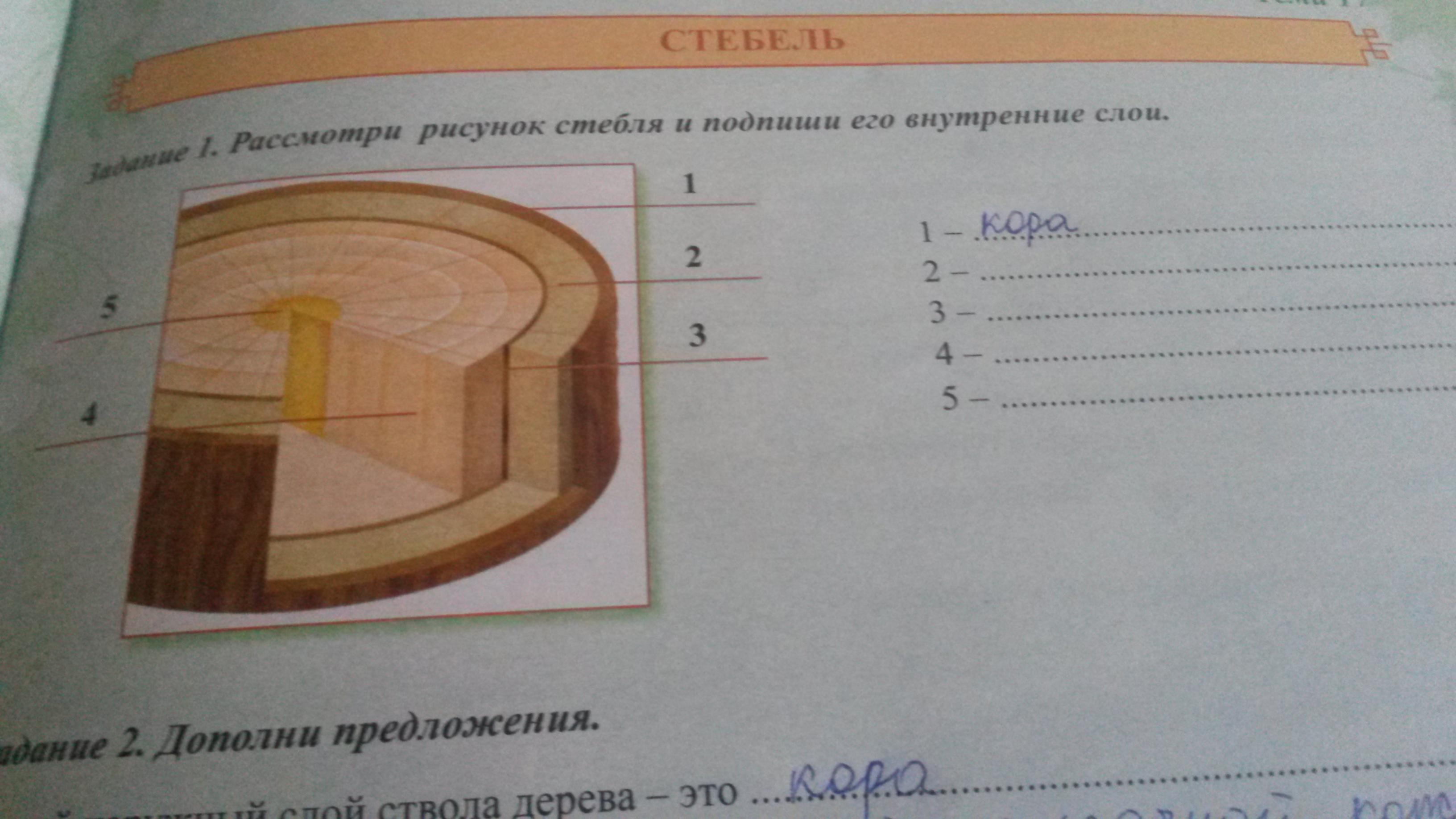 Рисунки стебля