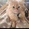 cat162