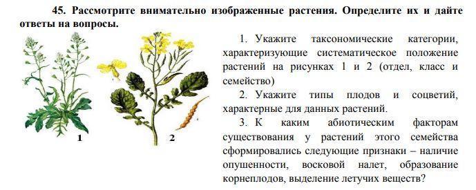 Рассмотрите внимательно изображенные растения.