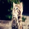 KittyN