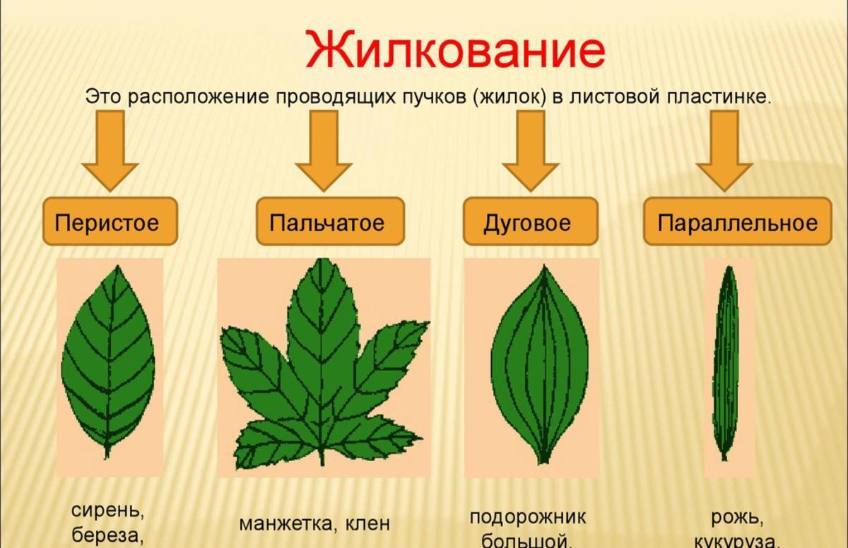 Что значит найти 3 простых листочка с разным