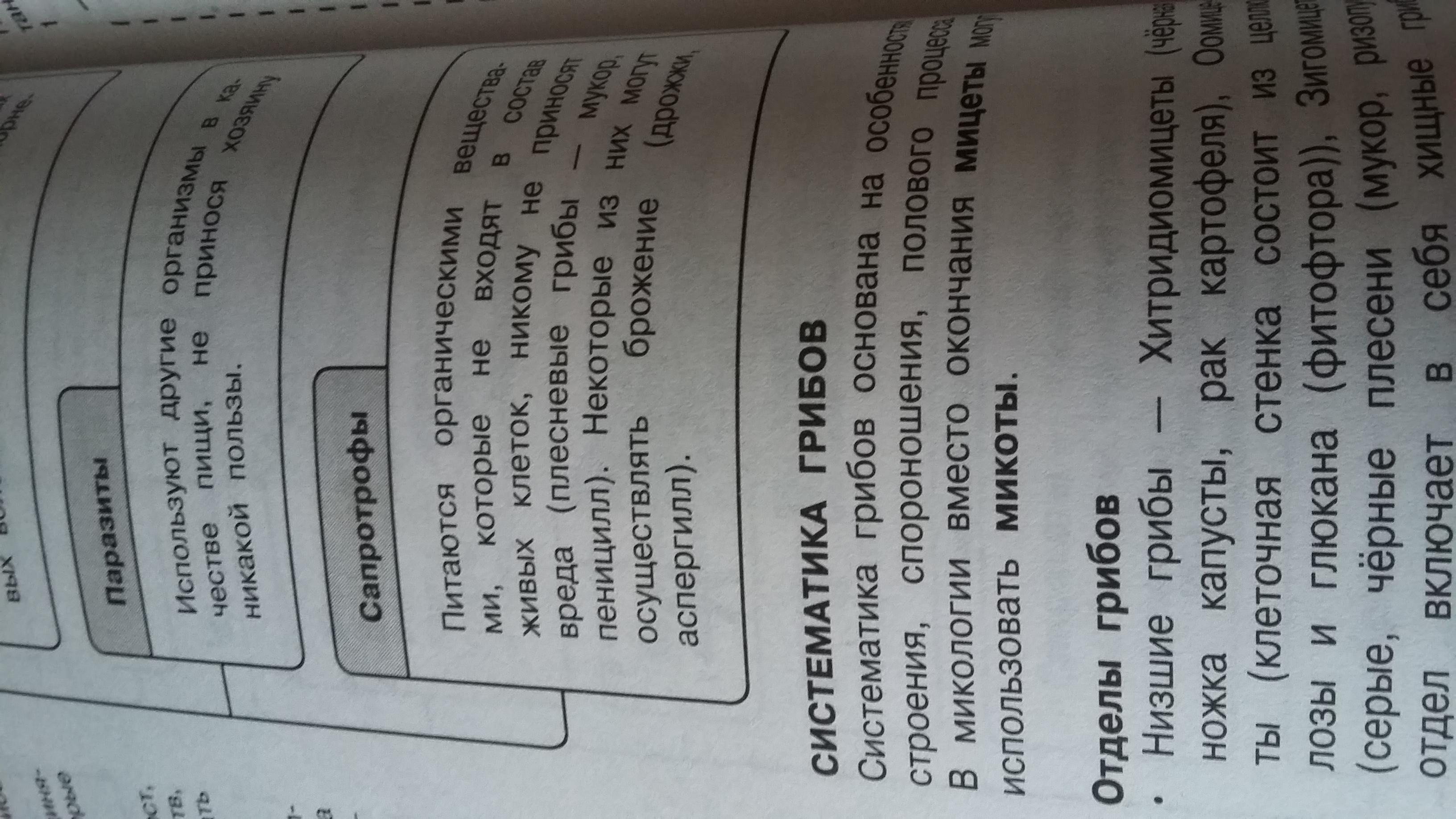 биология реферат для класса на тему грибы Школьные Знания com Комментарии Отметить нарушение