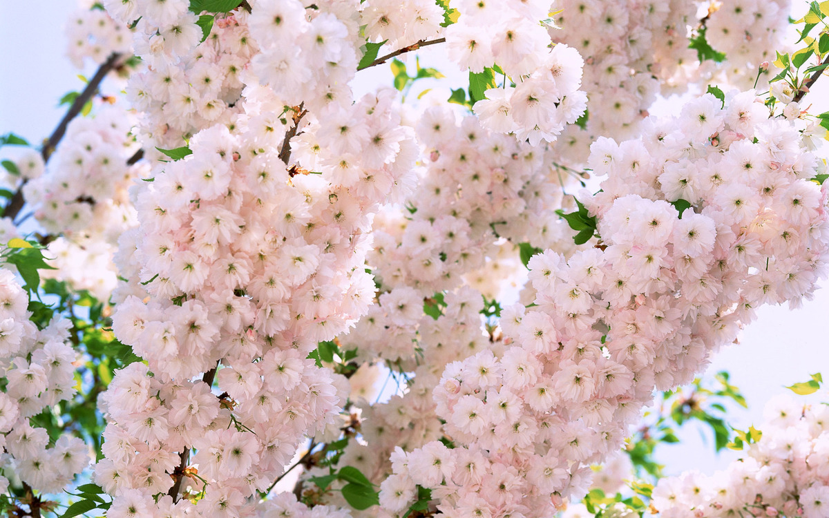 Сочинение картинки весны в настоящем времени