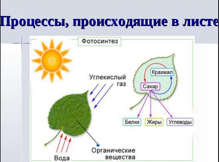 Названия цветов растений по алфавиту с картинками
