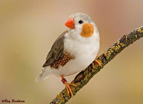в лесу запели птицы