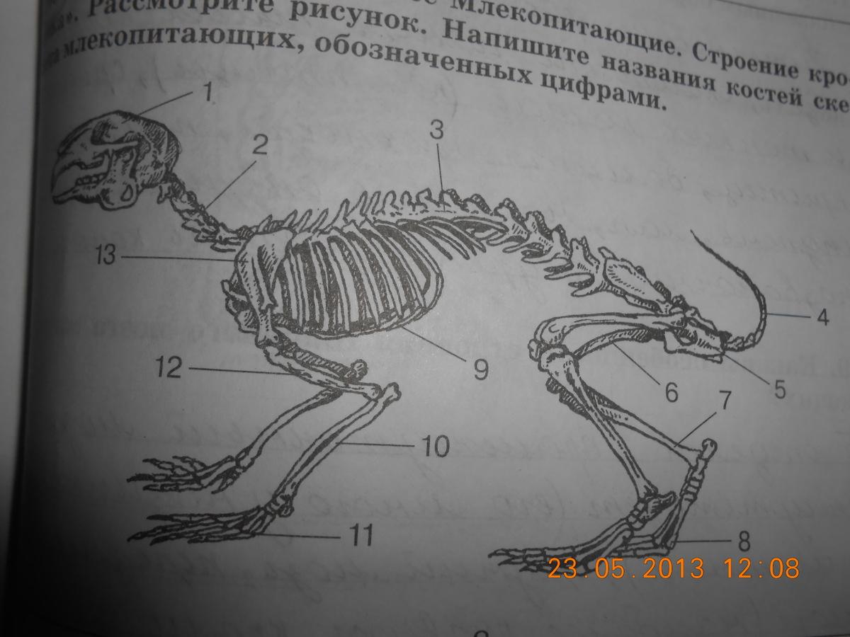 термобелья выводить рассмотрите рисунок напишите названия костей скелета млекопитающих хорошей эластичности