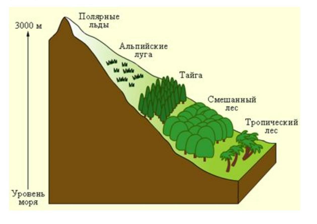 сколько процентов суши занимают равнины