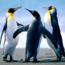 БешеныйПингвин