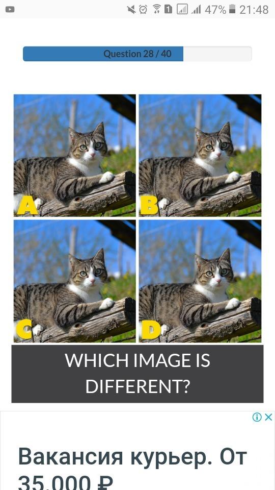 Найдите различие между четырьмя котами.