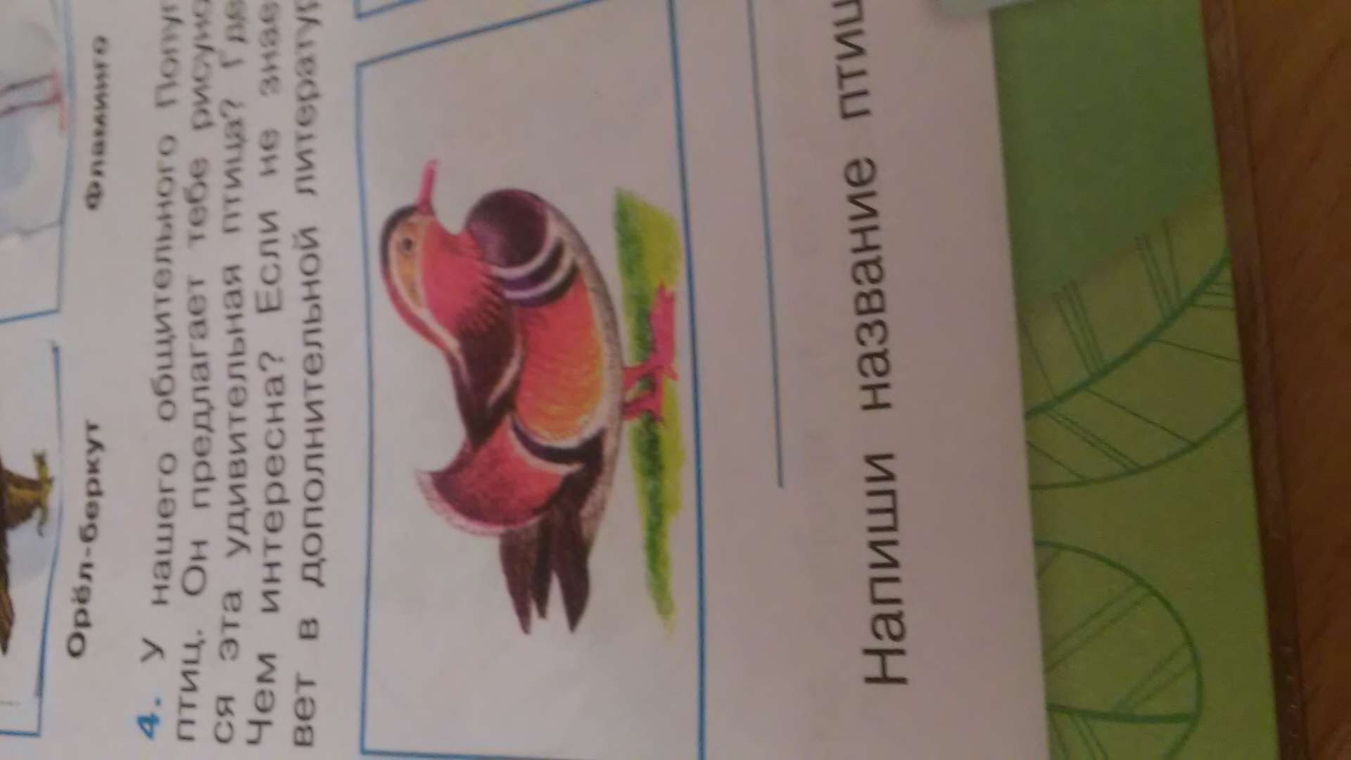 Как называется эта птица